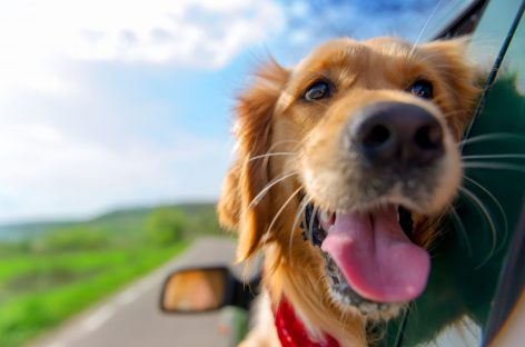 Locauto Rent, guida per noleggi pet friendly